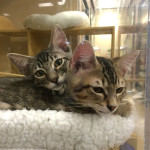 Cat adoptions are on the rise.