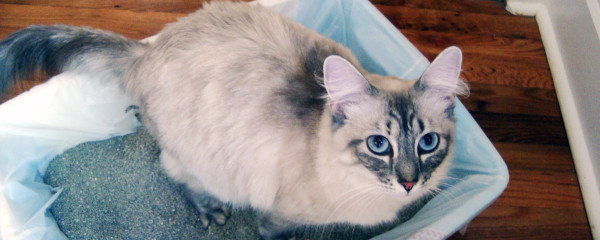 The Trouble with Cat Litter
