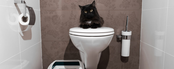 HELP! My Cat Stopped Using the Litter Box