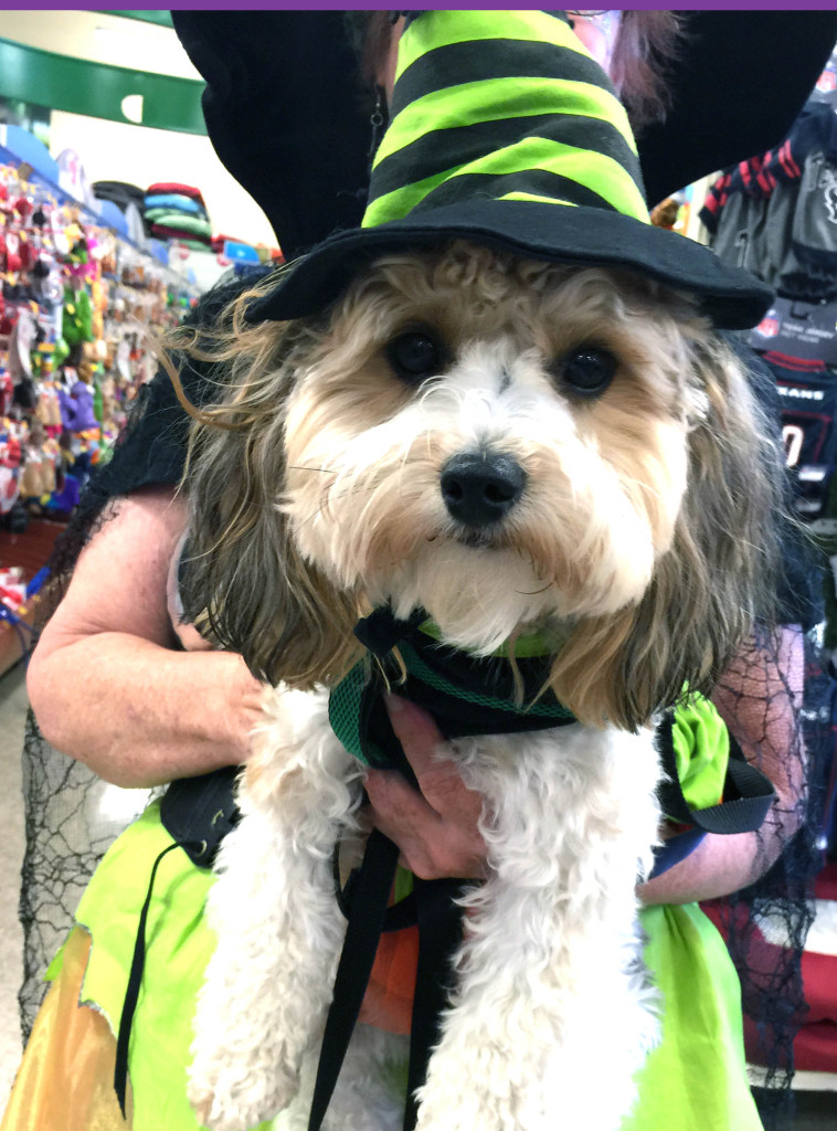 Bark-O-Ween! Texas Animal Guardians Contest - voted Cutest