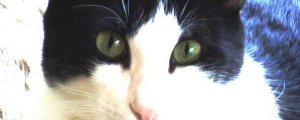 Respiratory Disease: Study on Silica Dust in Cats