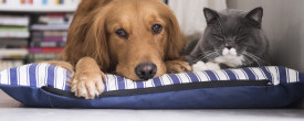 Introducing Your New Cat to Your Dog