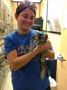 Cat adoptions are on the rise