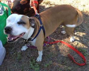 Texas Animal Guardians Dog Squad Program