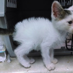 Texas Animal Guardians helped this litte starved kitten recover