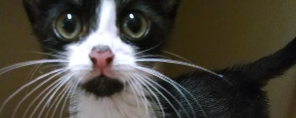 Abandoned Kitten Found in a Shoebox!