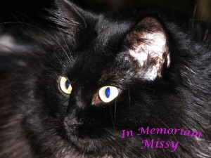 memoriam missy
