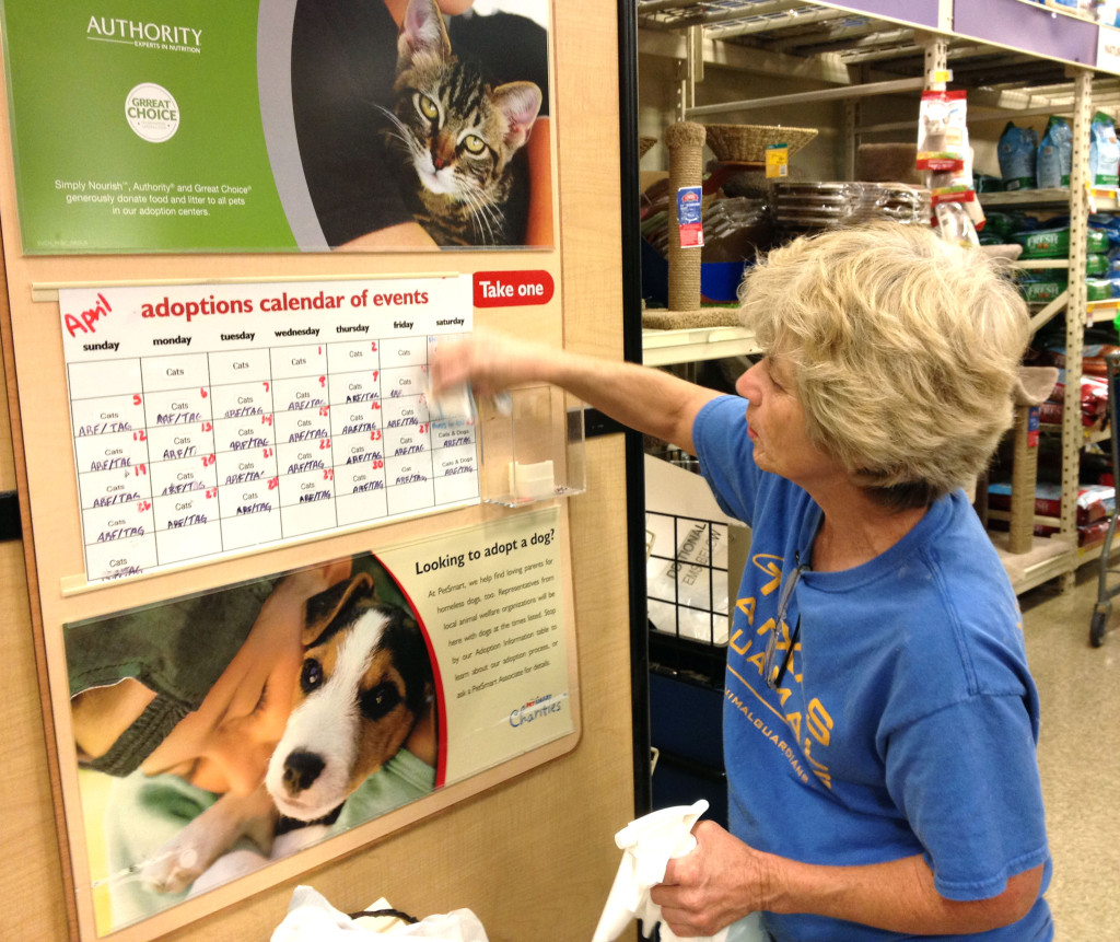 Cat adoptions are  on the rise at Petsmart store in New Braunfels