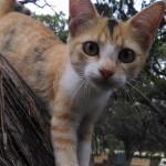RVPark_kitten_n