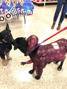Bark-O-Ween! Texas Animal Guardians voted scariest!