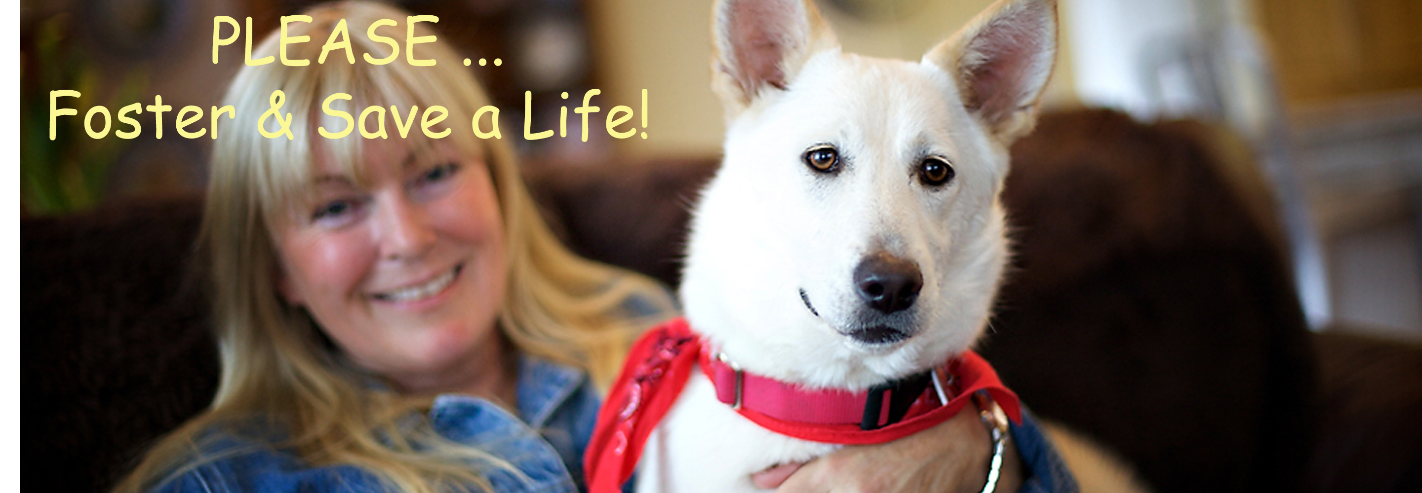 Bringing People and Pets Together – Shonee Pup