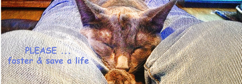 Bringing People and Pets Together – Tivoli Kitty