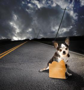 Thunderstorm dog