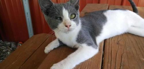 Feral Cat TNR Project