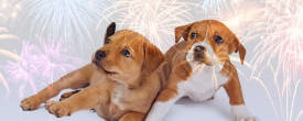 Dogs are Scared of Fireworks and Thunderstorms!
