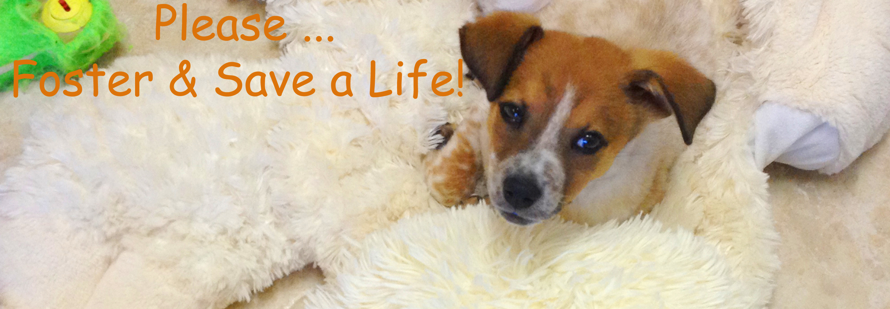 Bringing People and Pets Together — Karma Pup